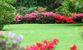 Best Practices for Lawn and Garden Watering