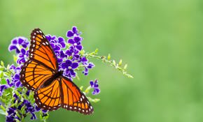 Invite Butterflies and Birds to Your Backyard